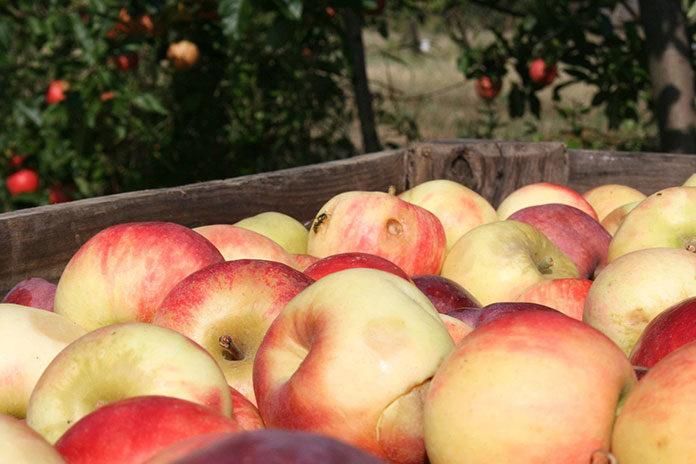 Dlaczego warto kupić plastikowe skrzynki na jabłka?