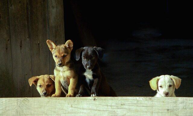 Pożywienie dla psa
